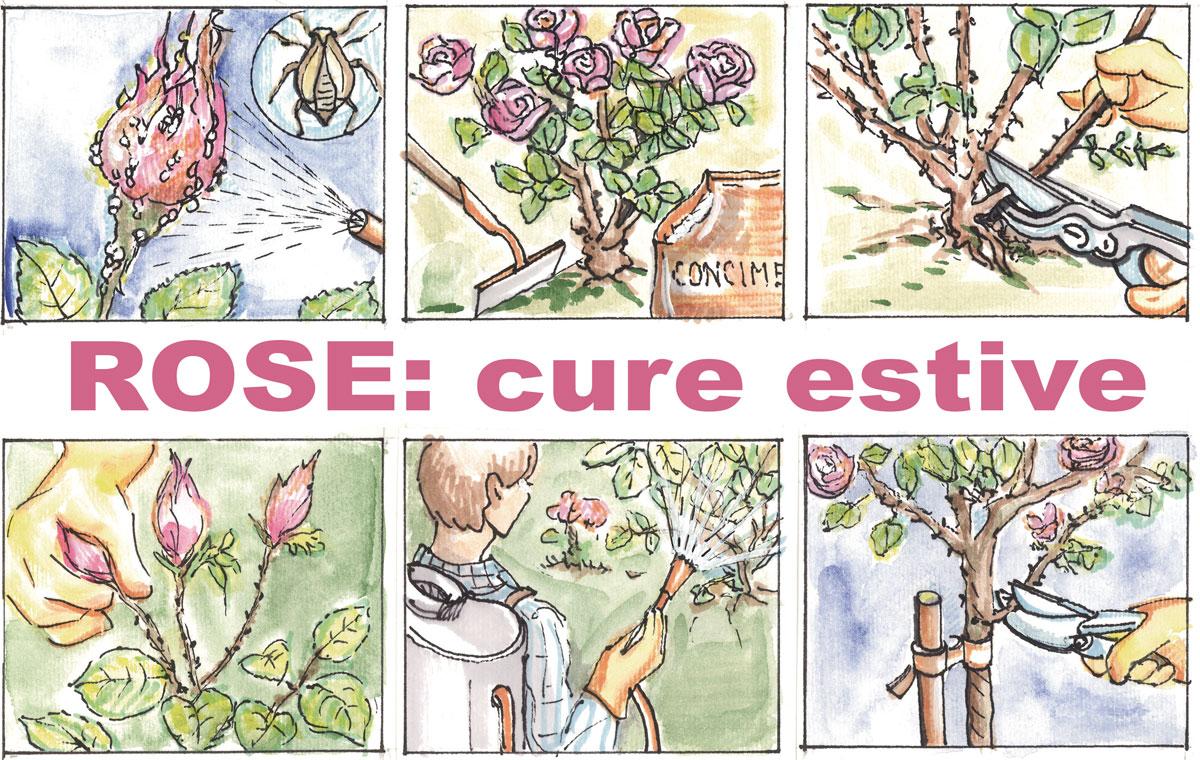 Combattere Afidi Delle Rose curare le rose in estate - fai da te in giardino