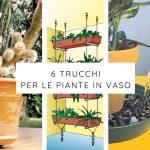 6 Trucchi per le piante in vaso