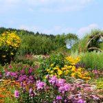 Fiori autunnali | Elenco, immagini e coltivazione