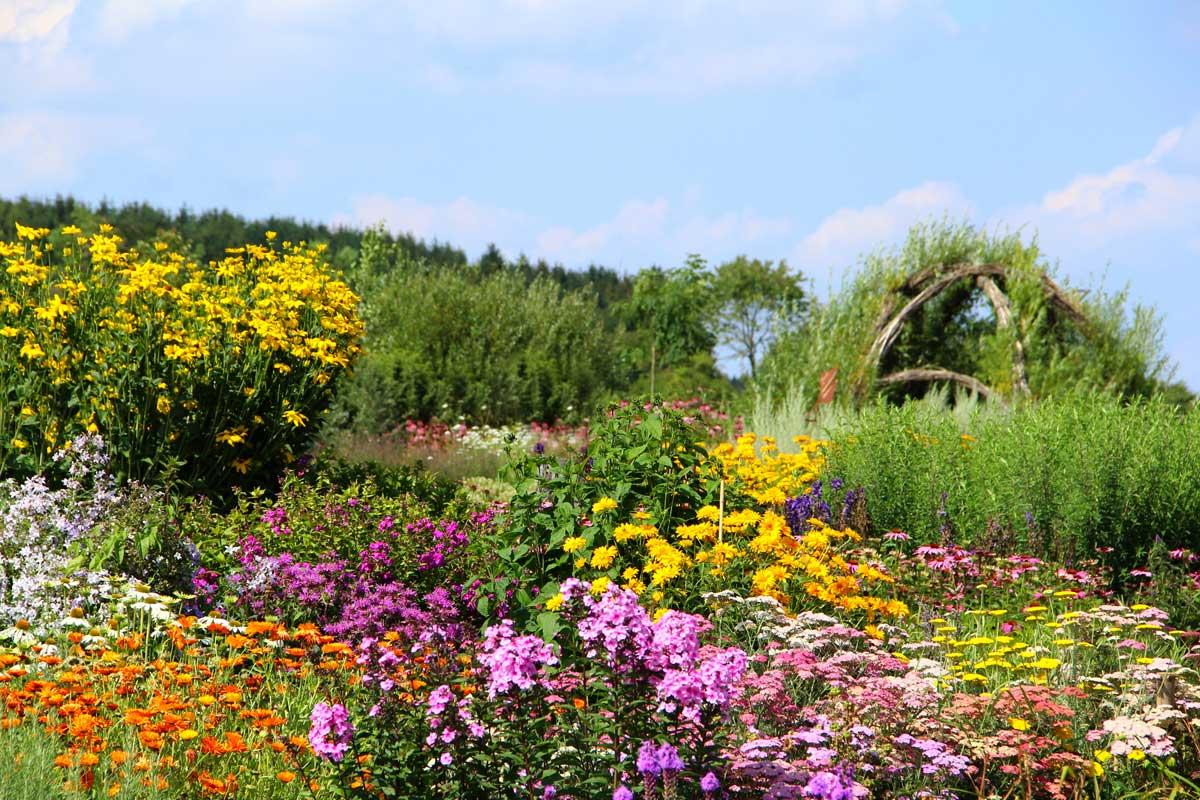 Fiori autunnali elenco immagini e coltivazione fai da for Immagini fiori autunnali