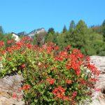 Fioriture nel tronco | Come ricavare fioriere dal tronco