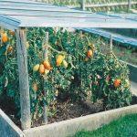 Serra veloce per l'orto | Per proteggere le piante