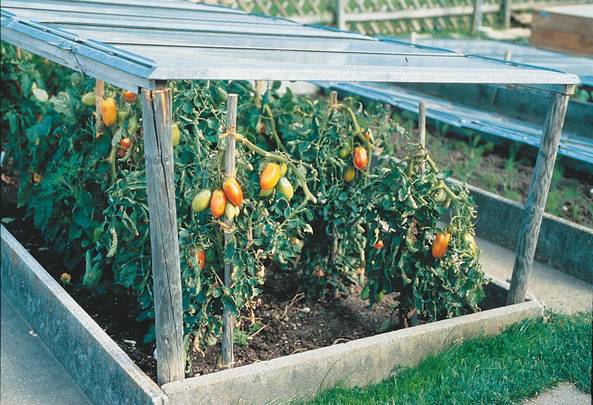Copertura Giardino Fai Da Te serra veloce per l'orto | per proteggere le piante - fai da