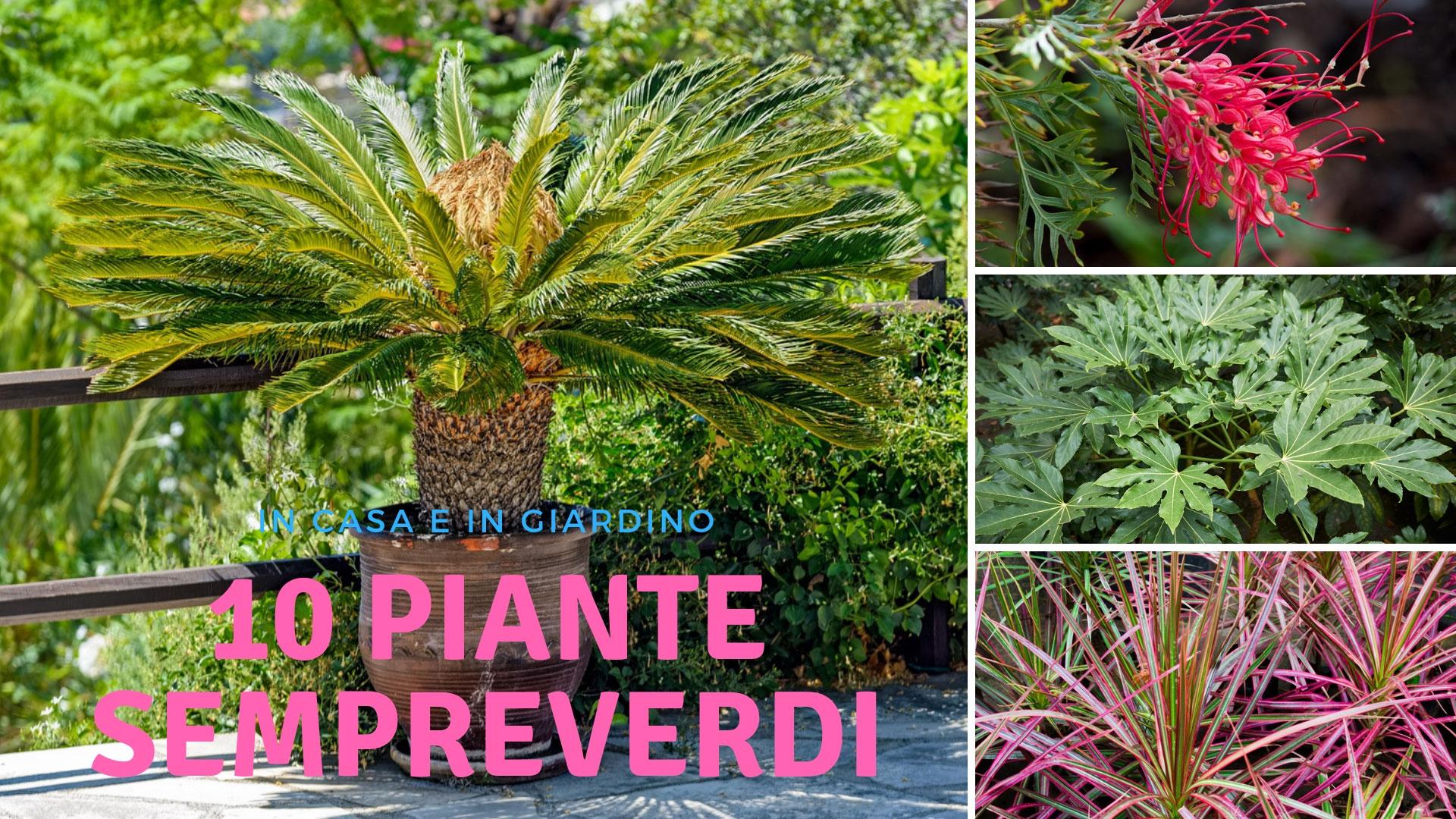 Fiori Perenni Da Balcone piante sempreverdi | da giardino o in casa, anche fiorite