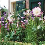 10 domande sui bulbi da fiore