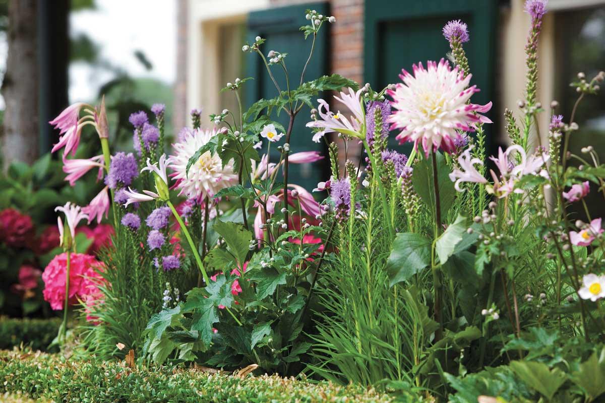 Quali Bulbi Piantare In Primavera 10 domande sui bulbi da fiore - fai da te in giardino