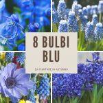 Gli 8 bulbi dai fiori blu più belli