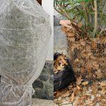 Pianta protetta con foglie autunnali