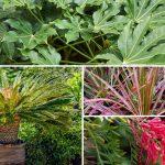 Piante sempreverdi | Da giardino o in casa, anche fiorite