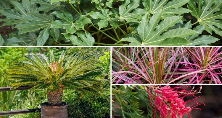 Piante da giardino sempreverdi e fiorite quali scegliere