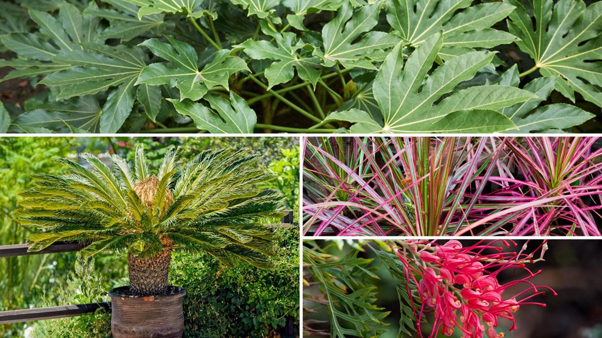 Piante Piccole Da Giardino piante sempreverdi | da giardino o in casa, anche fiorite
