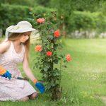 Piantare, potare e curare i rosai