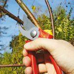 Talea legnosa delle piante arbustive