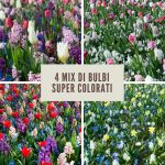 4 mix di bulbi con cui decorare il giardino