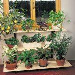 Carrello per piante d'appartamento | Costruzione fai da te