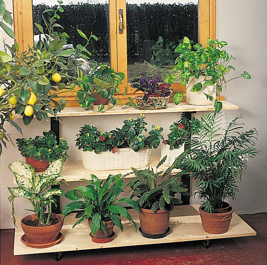carrello piante