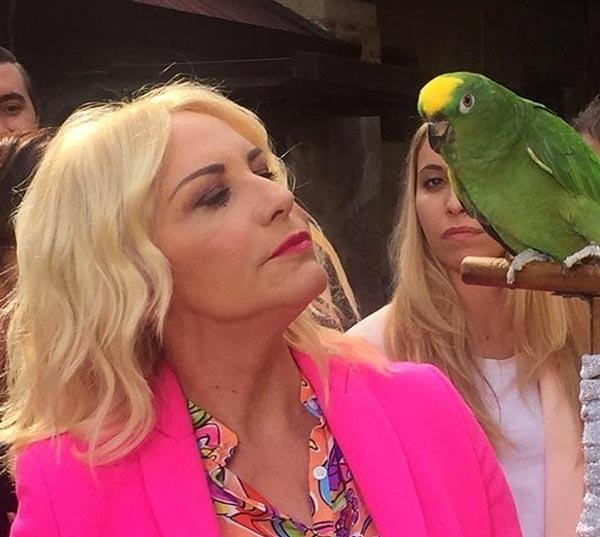pappagallo clerici