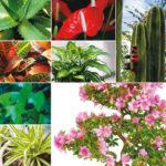 20 piante per purificare l'aria della tua casa