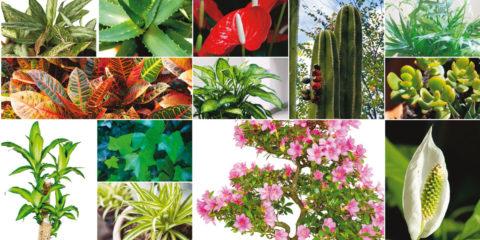 piante per purificare l'aria
