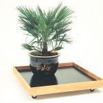 Carrello per piante d'appartamento