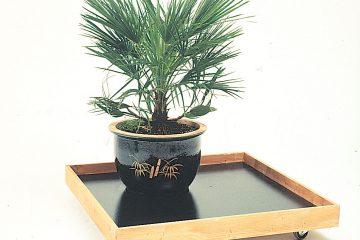 carrello piante appartamento