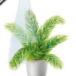 Puliamo le piante d'appartamento con una doccia!