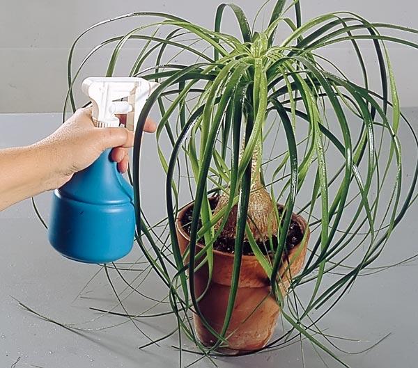 Piante da appartamento come curarle in inverno fai da te for Piante secche ornamentali
