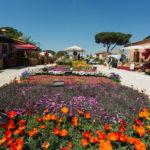 FloraCult 2019, mostra e mercato di florovivaismo amatoriale