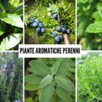 Piante aromatiche perenni | 6 tipi da coltivare tutto l'anno