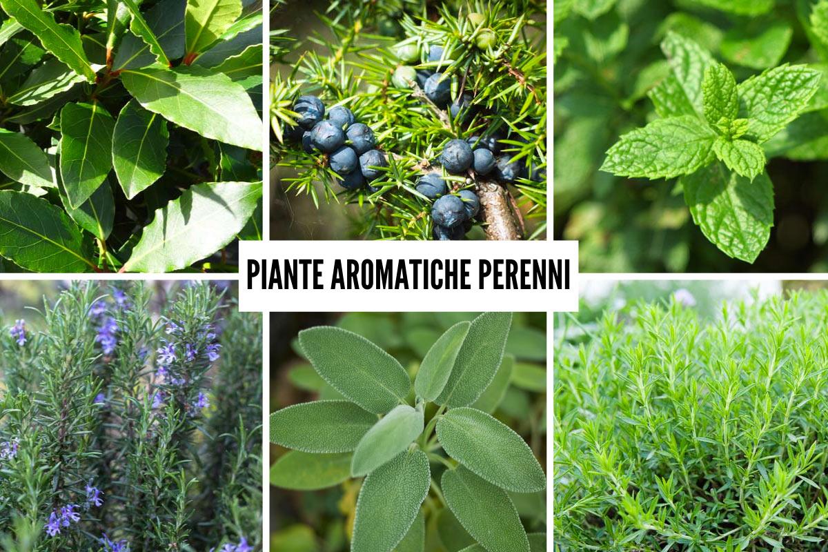 Piante Perenni Resistenti Al Freddo piante aromatiche perenni | 6 tipi da coltivare tutto l'anno