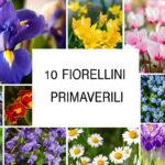 10 fiorellini primaverili coloratissimi
