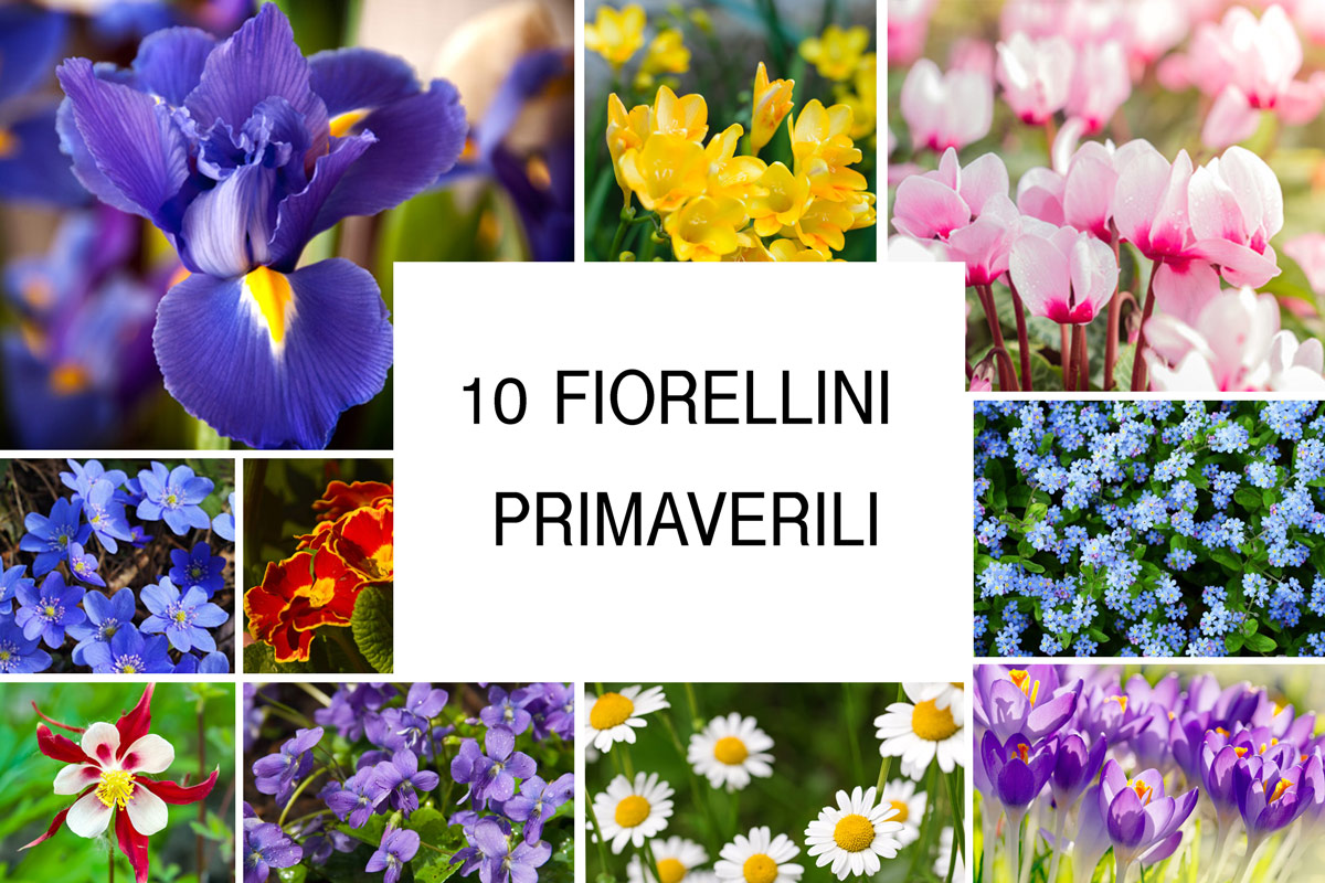 Fiorellini primaverili