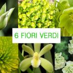Fiori verdi | 6 idee per composizioni originali