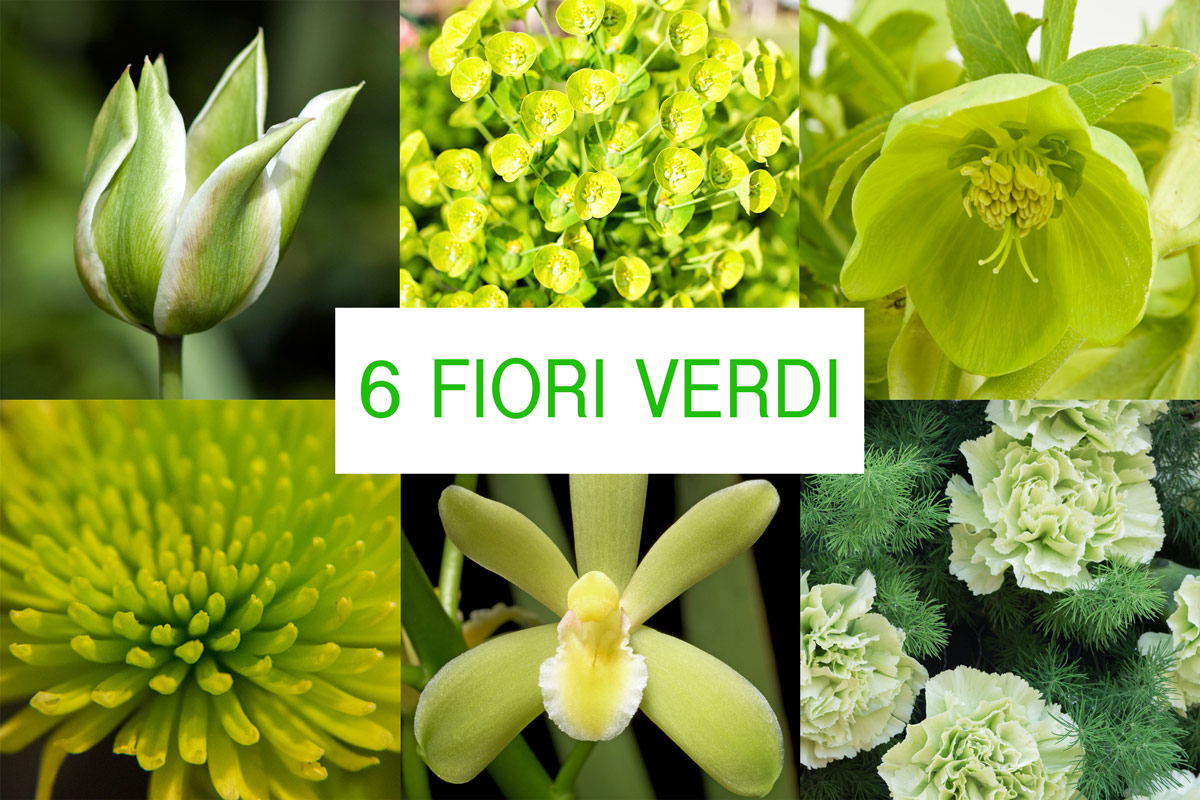 Fiori Verdi Nomi.Fiori Verdi 6 Idee Per Composizioni Originali Fai Da Te In