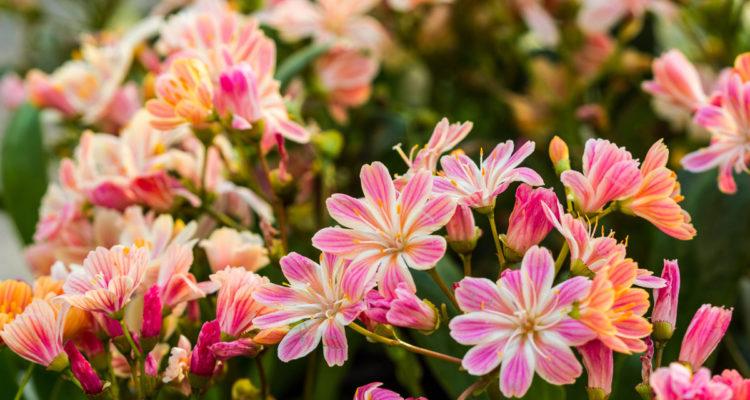 Piante Grasse Con Fiori.Piante Grasse Cactacee Succulente Semprevivi Un Elenco Completo