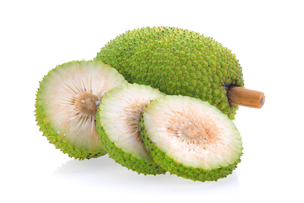 albero del pane frutto