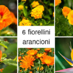 Fiorellini arancioni | 6 idee per il giardino