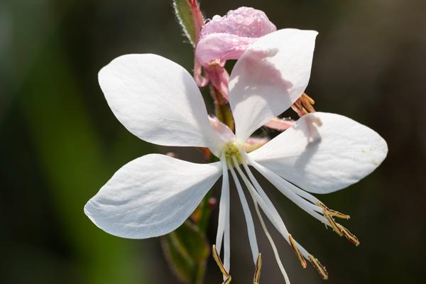 Fior di orchidea