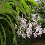Orchids @ Muse | Esposizione internazionale di orchidee tropicali