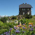 Flora italiana | Ogni regioneha la sua pianta simbolo
