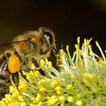 Salva le api dai pesticidi, firma la petizione di Greenpeace