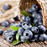 Mirtillo | Caratteristiche, coltivazione e varietà