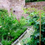 Hortus Conclusus | Il giardino medievaledei monasteri