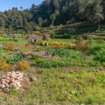 Permacultura | Pratiche agricole etiche e sostenibili