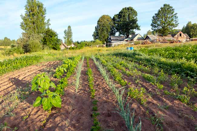 permacultura orto