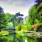 Alberi da giardino | Sempreverdi, con fiori e da frutto