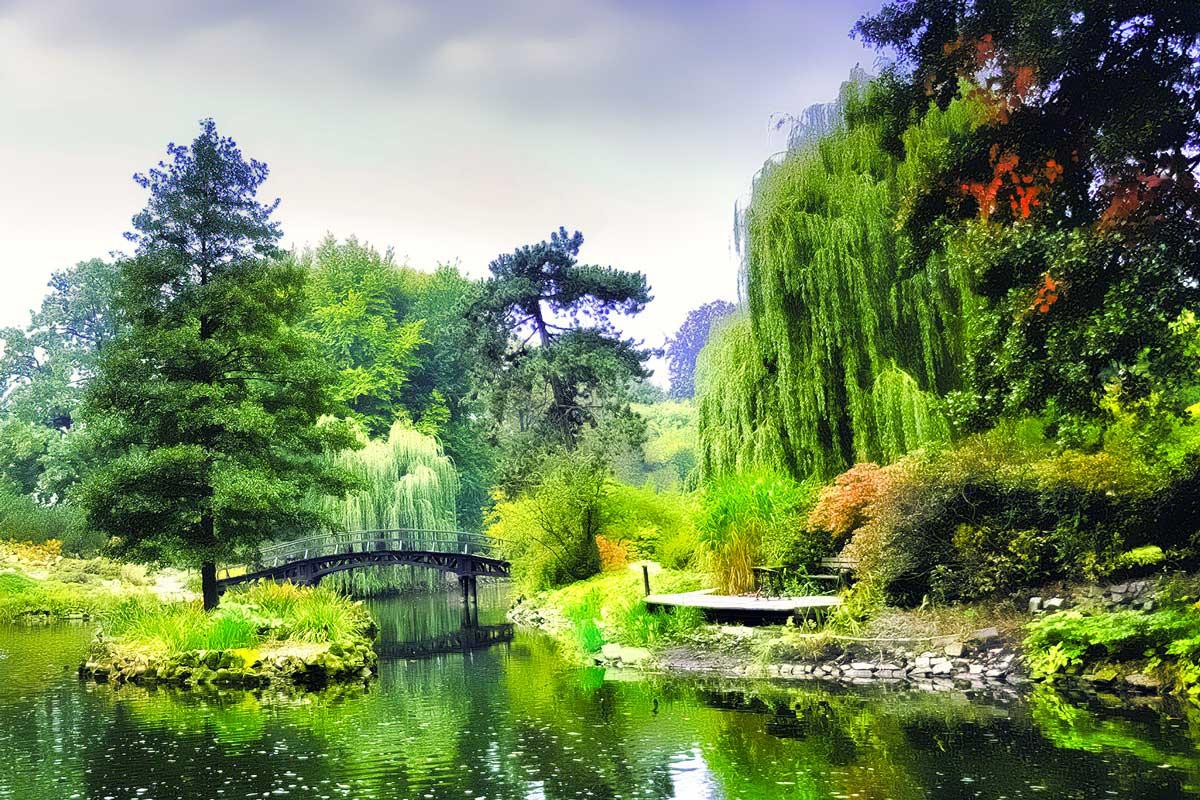 Alberi Ornamentali Da Giardino alberi da giardino | sempreverdi, con fiori e da frutto