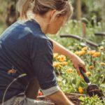 Fiskars a sostegno delle api per la salvaguardia del nostro pianeta