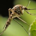 Mai più paura delle zanzare | MOSQUI-CO DROPS di ADAMA Home & Garden
