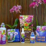 Concimare le orchidee con i prodotti COMPO | Recensione dettagliata